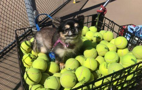 Varsity tennis a family affair: Garritys step onto the court