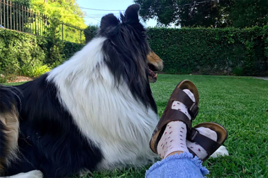 Birkenstocks are best worn with socks, while sitting outside, on the grass, next to your dog.
