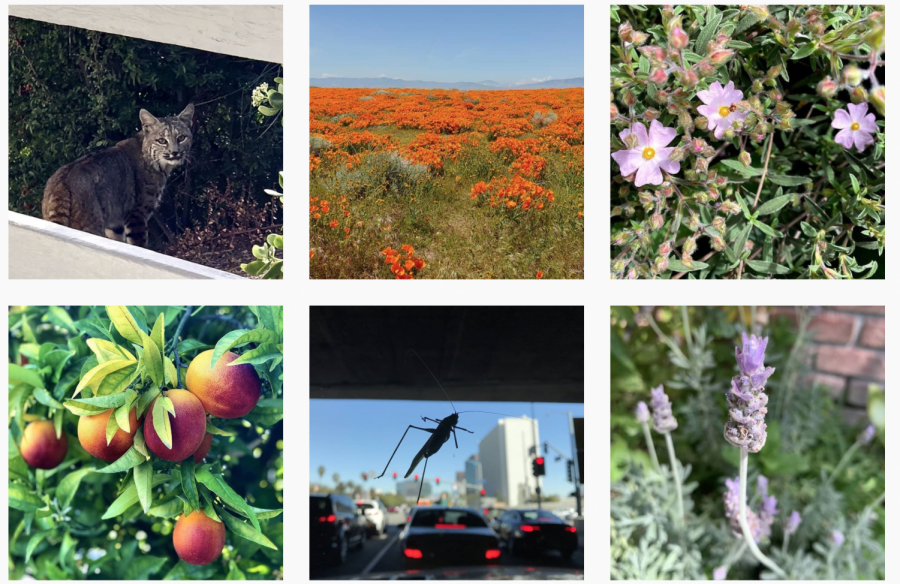 These are a few of the entries made to the Flintridge Sacred Heart Photography Contest organized by Ms. Wheaton.